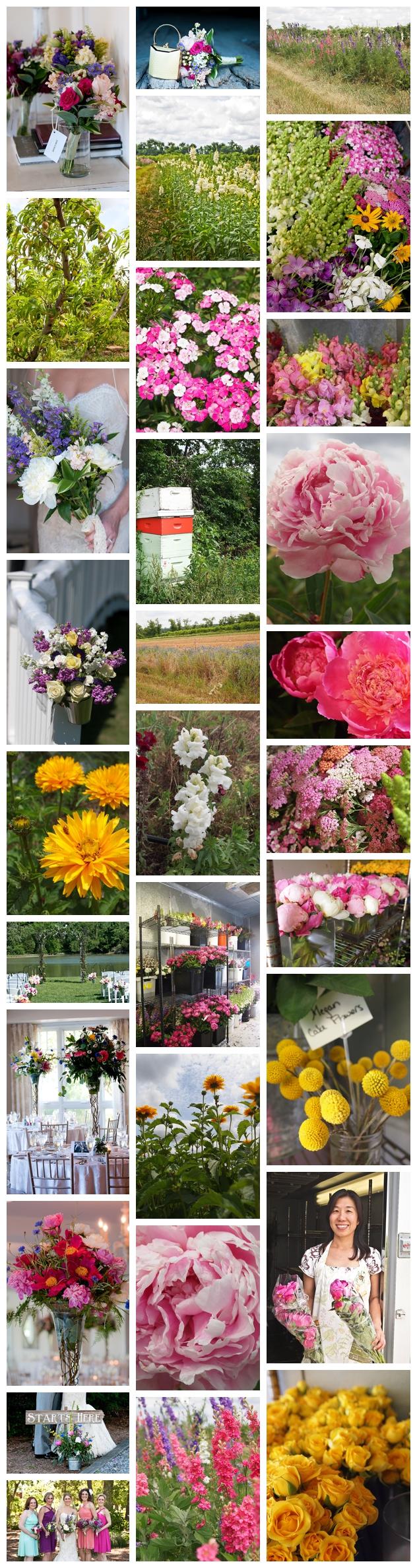 Seasonal Flowers , Federalsburg, Maryland