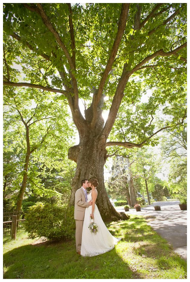 wedding kiss under the big tree
