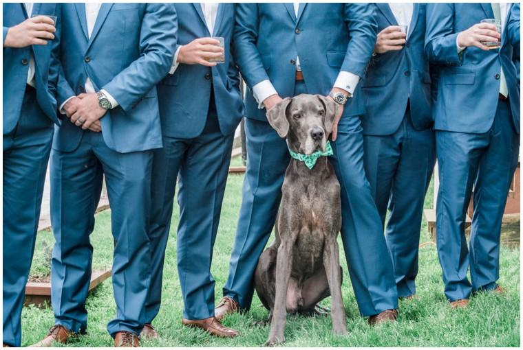 blue wedding, dog wedding photos