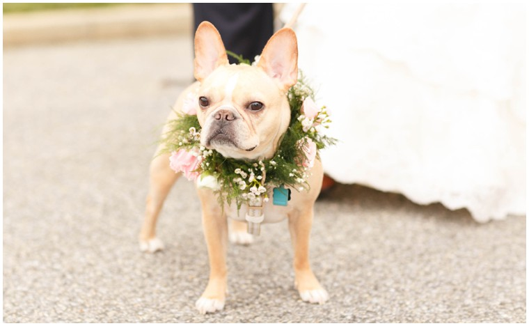 dog flower girl, wedding floral dog collar